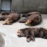 熊お休みタイム