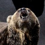 熊の口の中