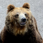 優しい顔の熊