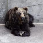 リラックス熊