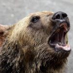 熊の雄たけび