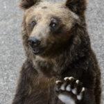 ハーイ♪熊